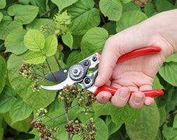 Darlac bypass secateurs