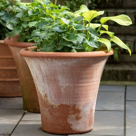 Terracotta arc pot