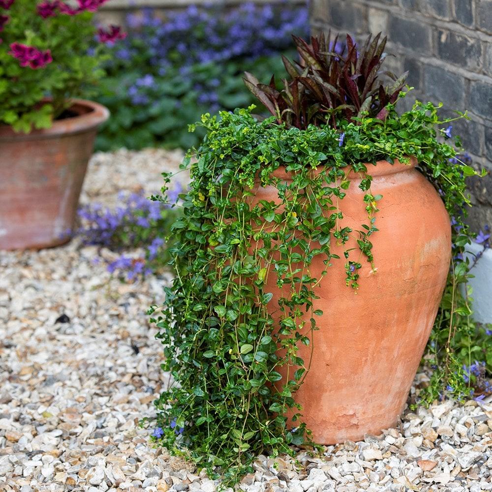 Buy Terracotta Tulip Pot