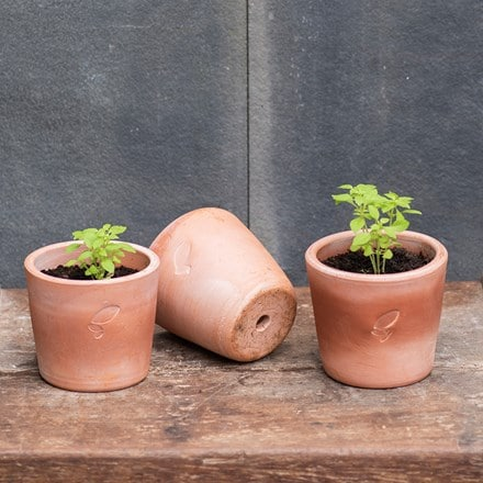 Terracotta seedling pots - set of 3