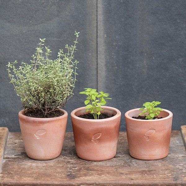 3 terracotta seedling pots
