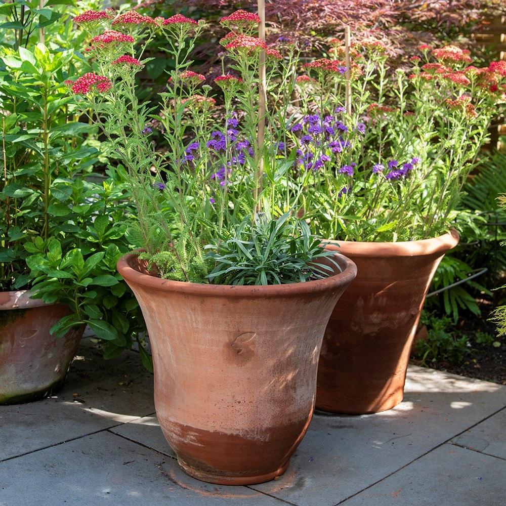 Bell terracotta lavender pot