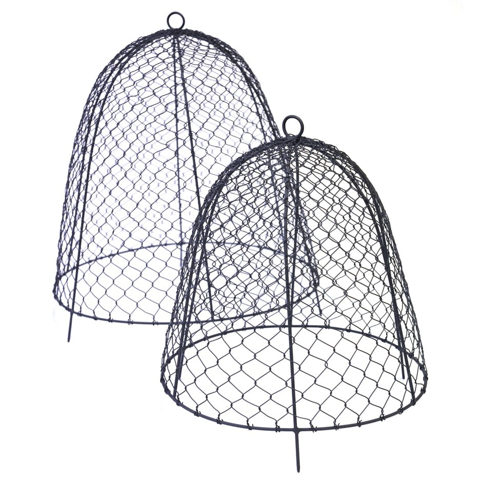 Buy Squirrel Proof Cloche Delivery By Waitrose Garden In