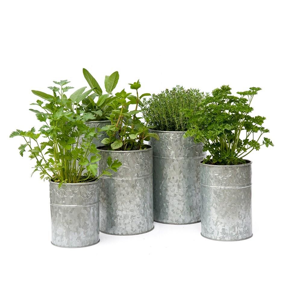Galvanised metal planters - set of 5