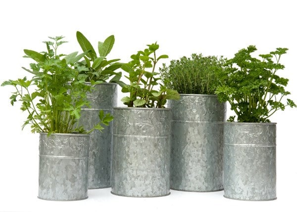 Galvanised metal planters - set of 5