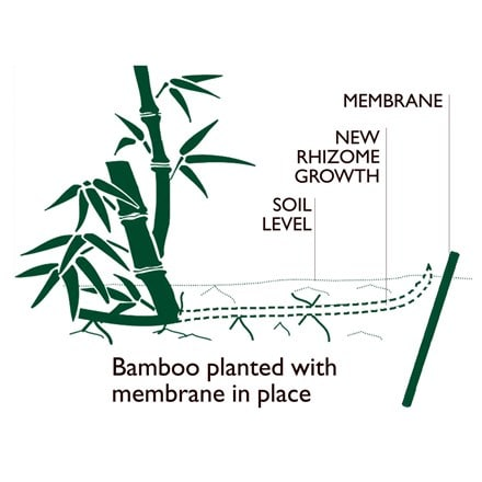 Bamboo control system