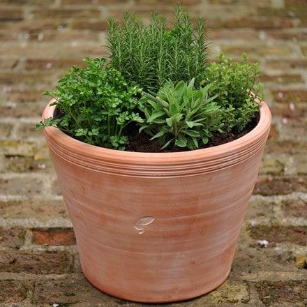 Kitchen garden terracotta pot