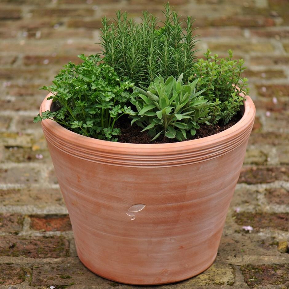 Buy Kitchen garden terracotta pot: Delivery by Crocus
