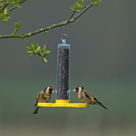 Goldfinch feeder tube