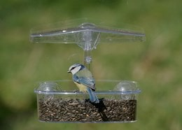 Window observer bird feeder