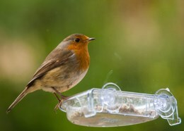 Window bird treat tray