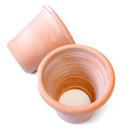 Terracotta grow pot