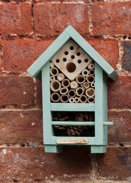 Buy Bee And Bug Home Delivery By Crocus