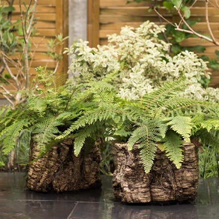 Cork fern pot