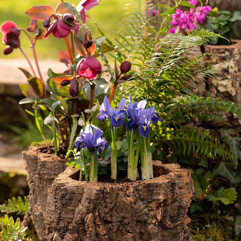Cork fern pot