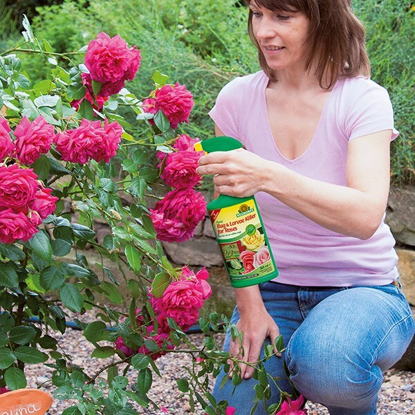 Bugfree bug and larvae killer for roses