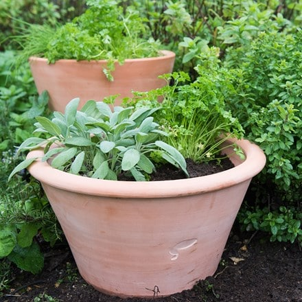 Terracotta rimmed grow pot