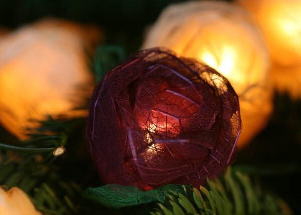 Burgundy and cream rose string lights