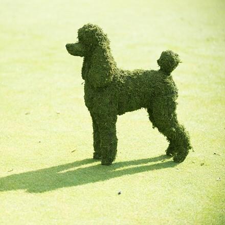 Poodle garden sculpture