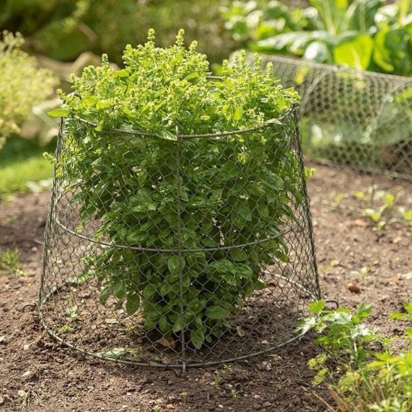 Reversible plant boma - cloche / support