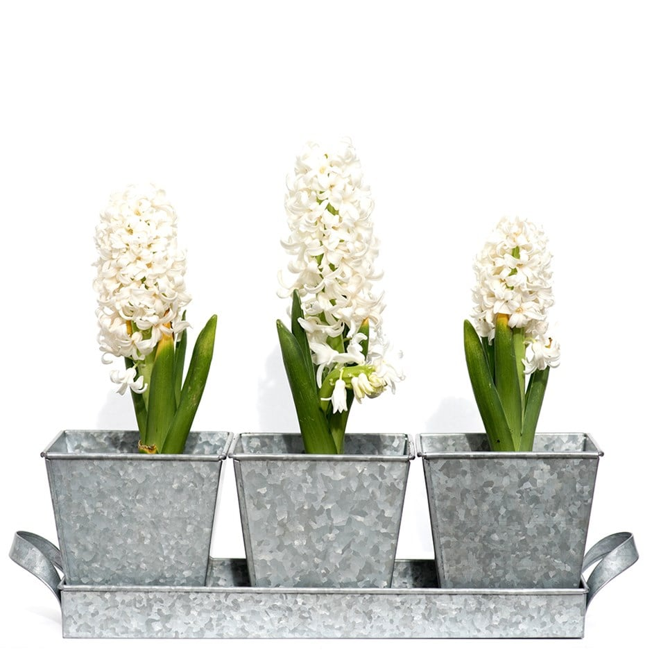 Image of Galvanised pots in a tray 3 pots
