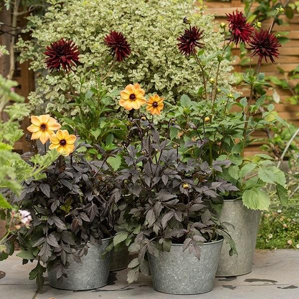 Galvanised planter bowl