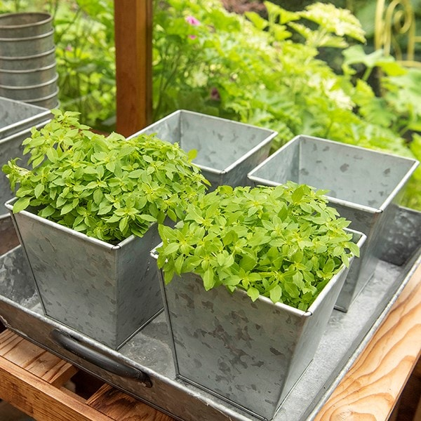 Square herb pot