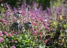 Echinacea plant stake - antique bronze