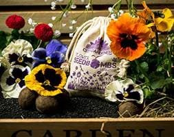 Seed bombs - butterfly