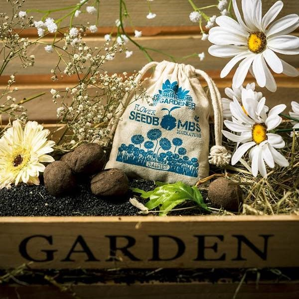 Buy gifts delivery by waitrose garden in association with crocus seed bombs daisies negle Gallery