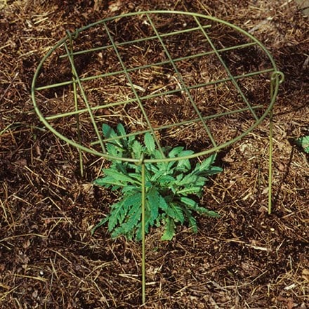 Grow-through ring support