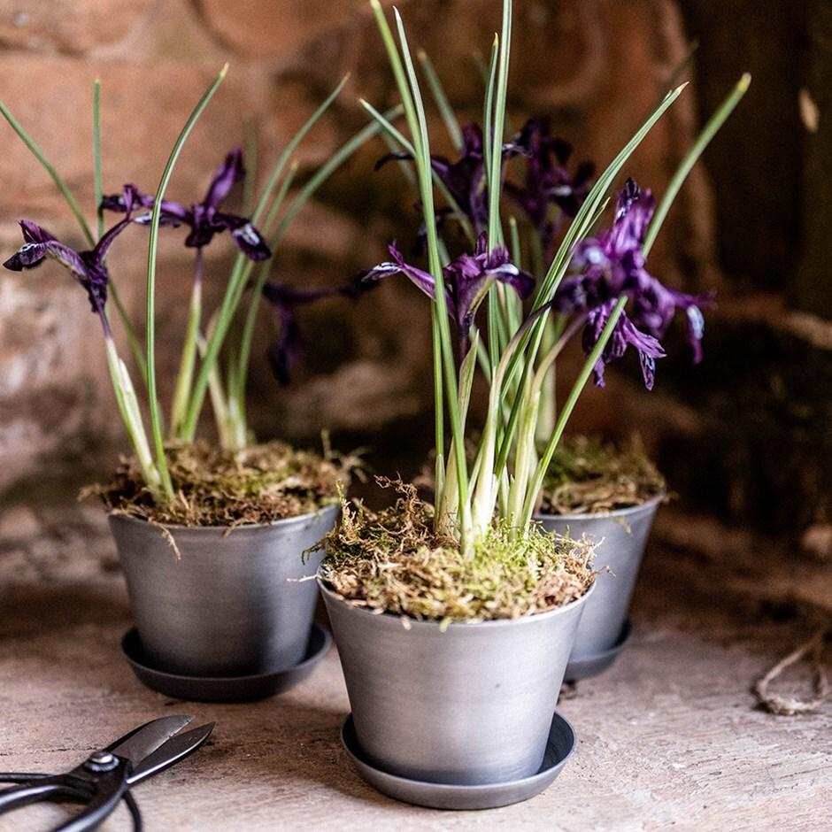 Set of 3 grow pots and saucers