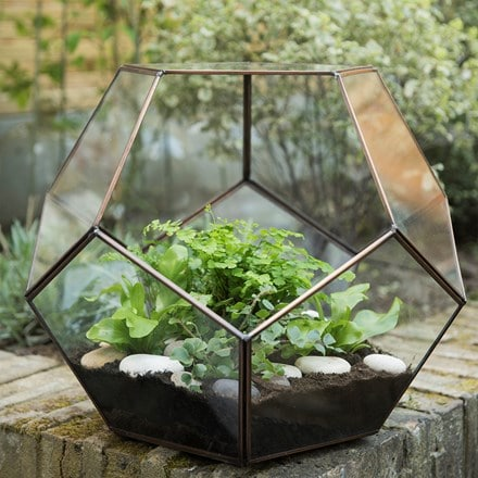 Buy Terrariums Delivery By Waitrose Garden In Association With Crocus