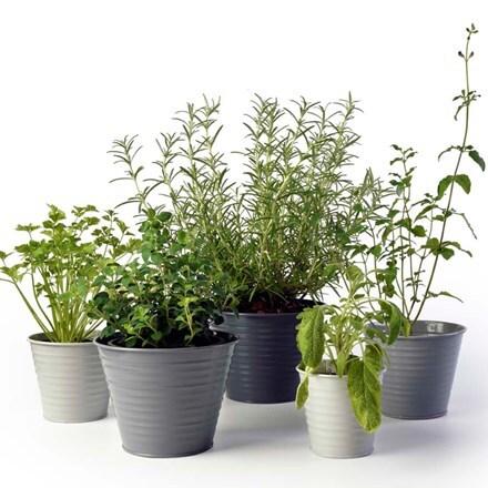 Set of five ombre pots