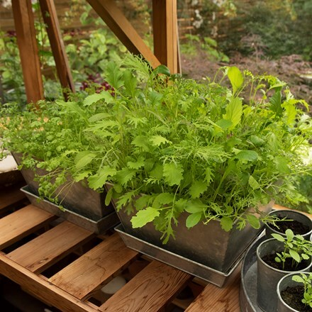 Galvanised planter