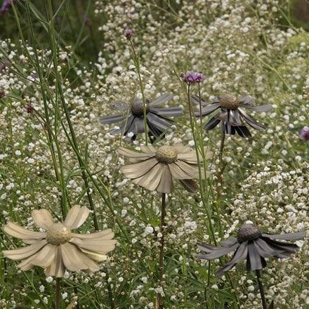 Helenium flower stake
