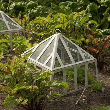 Square Victorian seedling cloche