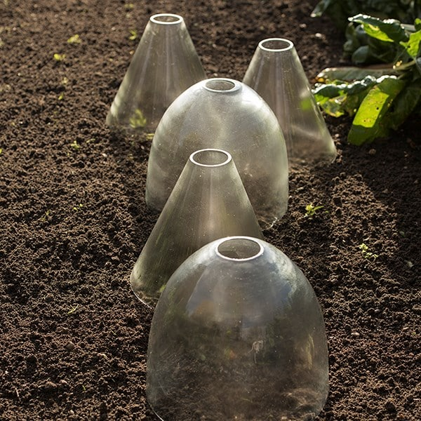 Open topped glass cloche