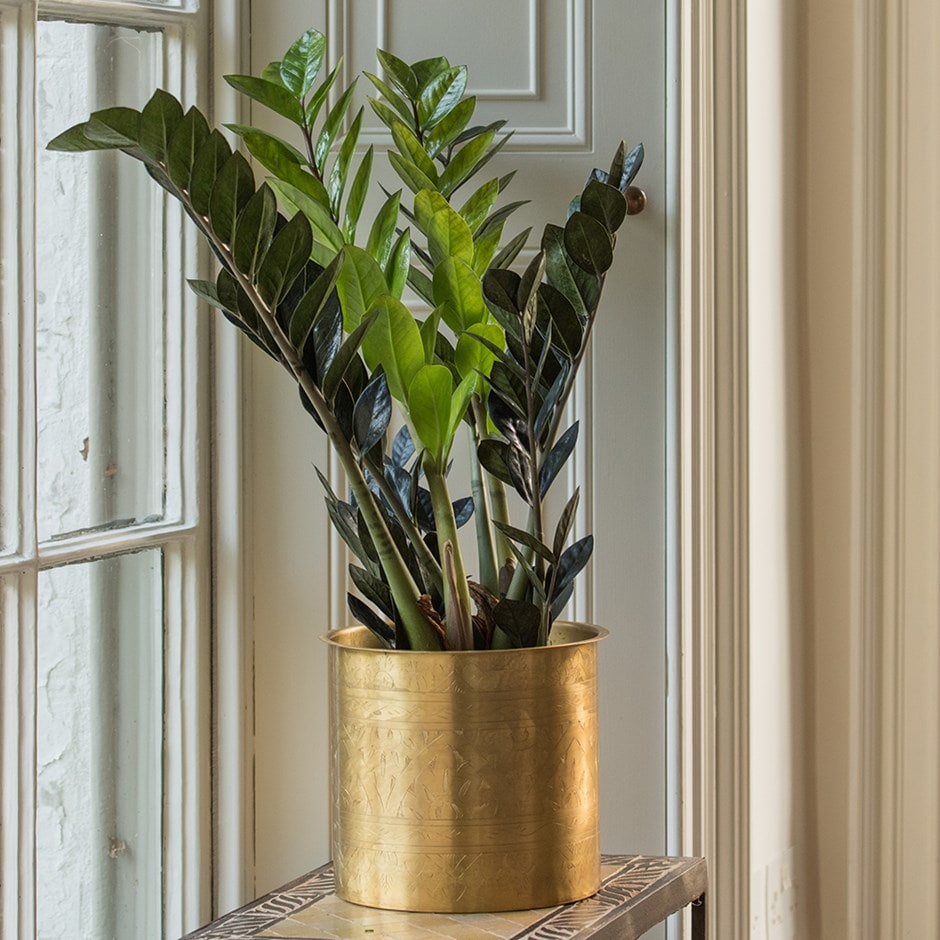 Solid brass hand etched planter