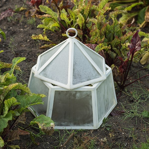 Hexagonal lidded cloche