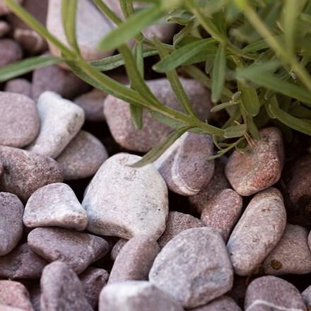 Decorative stones - morello