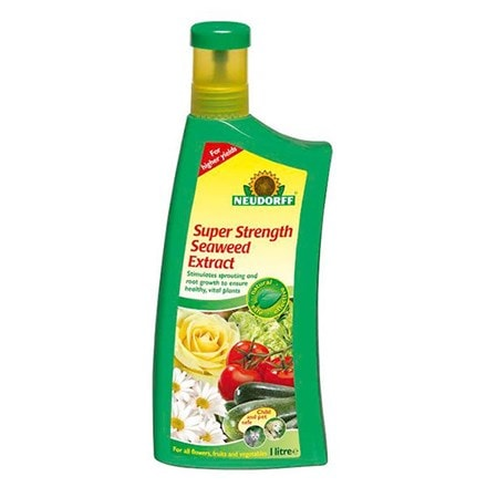 Super strength seaweed liquid