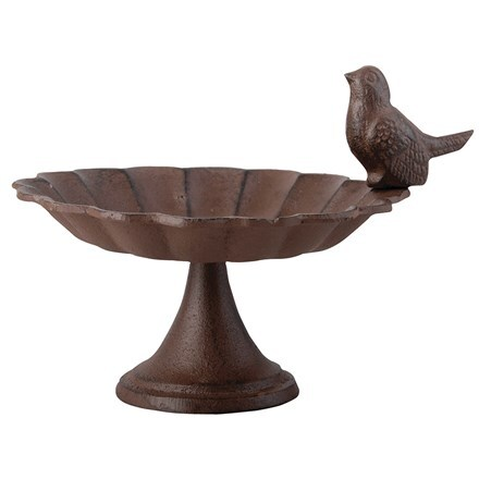 Bird bath with one bird