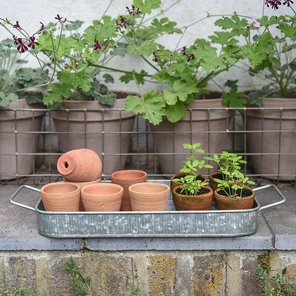 Terracotta grow pots and tray