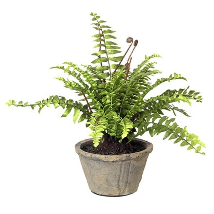 Artificial boston fern potted