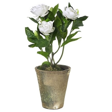 Artificial gardenia potted