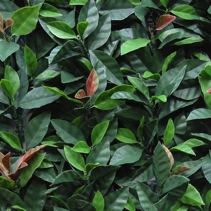 Easy hedge tiles photinia red robin