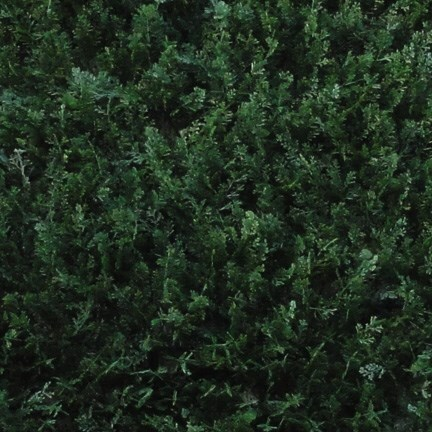 Easy hedge tiles conifer dark