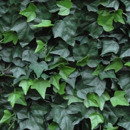 Easy hedge tiles hedera