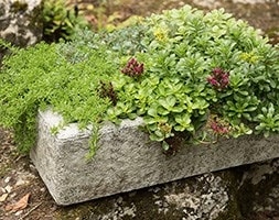 Alpine trough